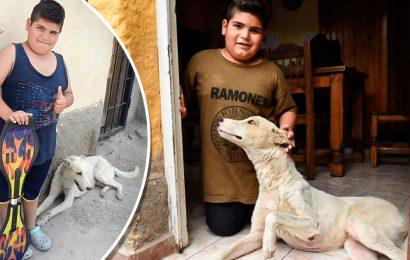 Ragazzino vende lo skateboard su Facebook per curare un cane randagio
