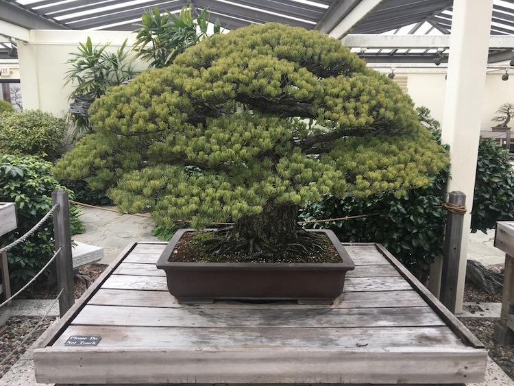 bonsai-hiroshima