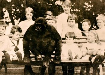 La storia di John Daniel, il gorilla allevato come un bambino
