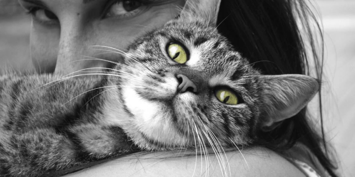 17 ragioni secondo le quali chi ha un gatto è pazzo (o lo sta per diventare)
