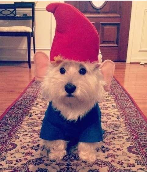Costumi di Carnevale divertenti per cani e gatti
