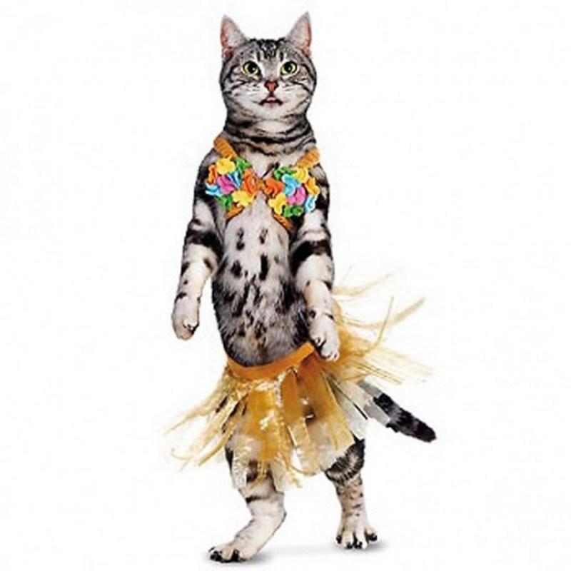 I più bei costumi di Carnevale per Gatti