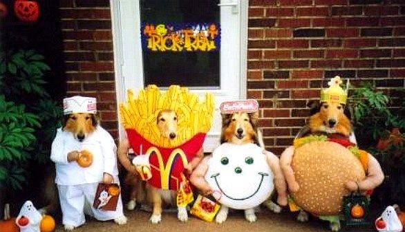 Costumi di carnevale per i cani: i 20 più belli e originali