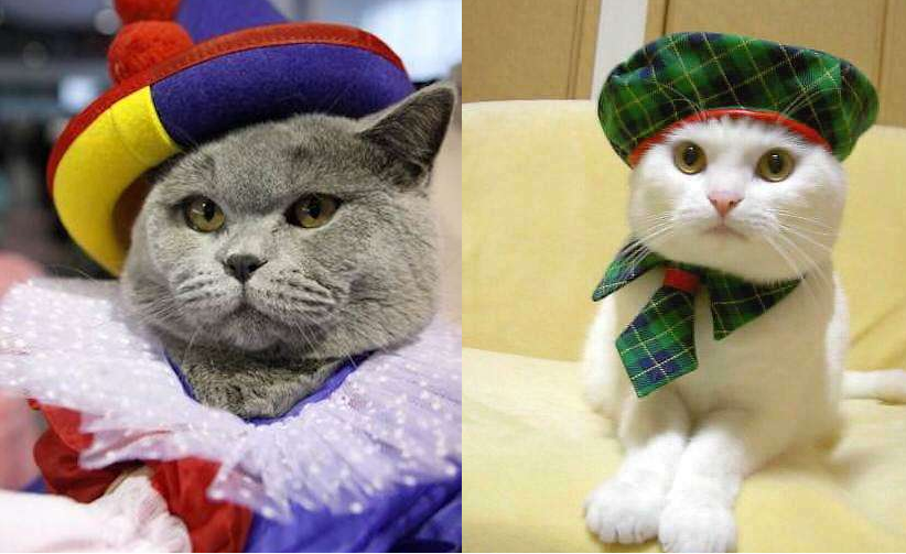 5 costumi di carnevale per gatti da fare a casa