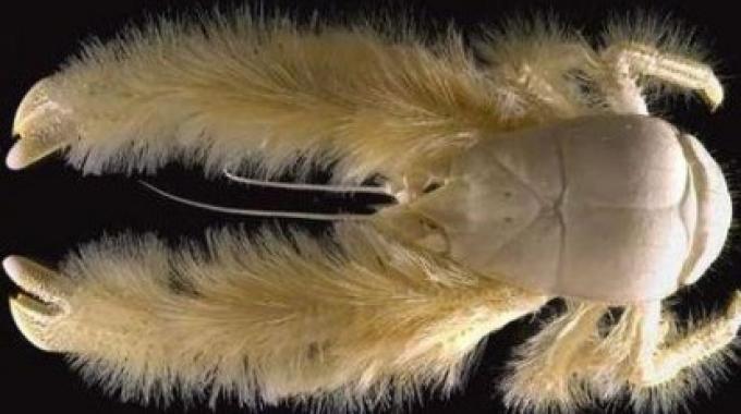 20 foto degli animali più strani e buffi del mondo