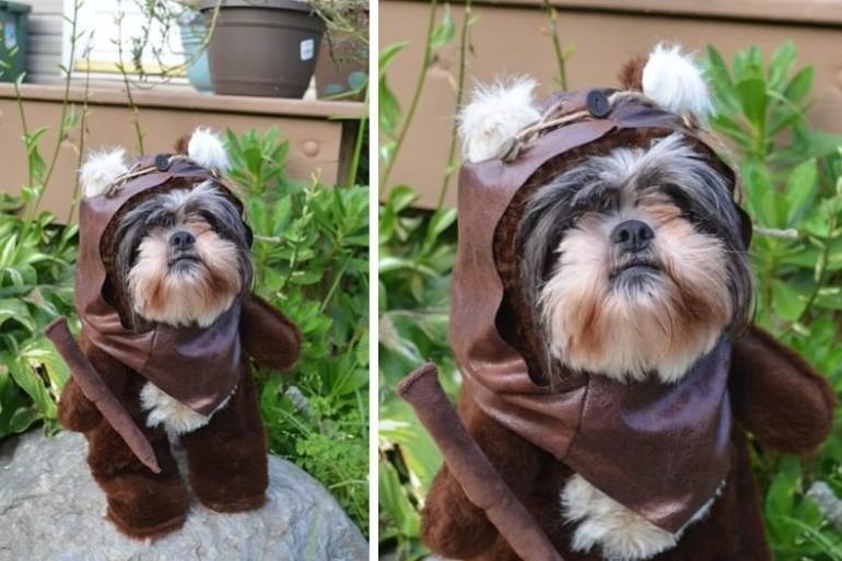 costumi carnevale cani