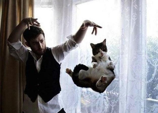 Foto Gatti Le 40 Immagini Più Belle E Divertenti Di Gatti