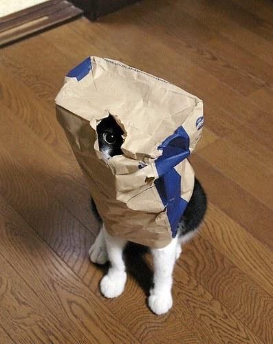 Foto Gatti: le 40 immagini più belle e divertenti di gatti