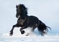 Foto di cavalli delle razze più belle e affascinanti del mondo