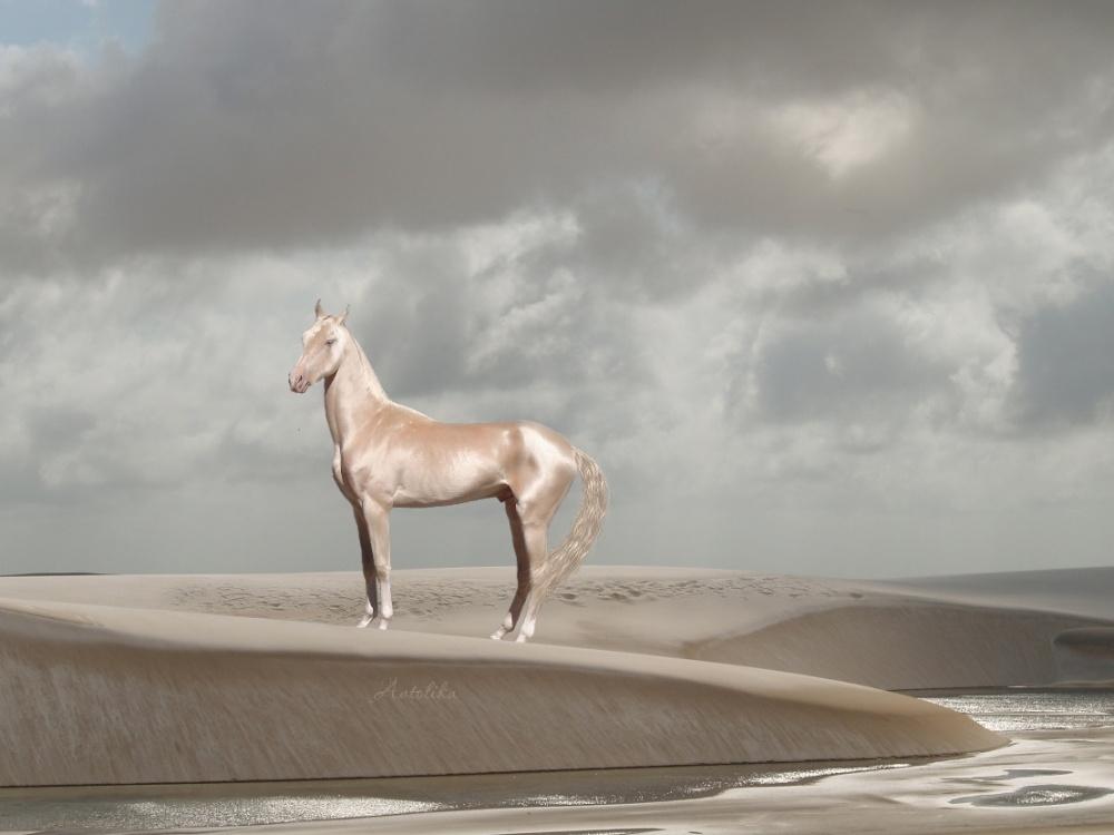 Foto dei cavalli più belli del mondo