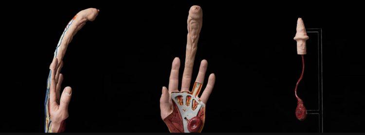 Qualcuno ha creato un dito in grado di aiutare una donna a restare incinta in autonomia