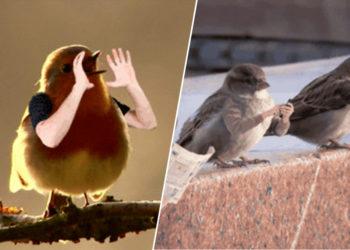 Le GIF di questi uccelli con le braccia sono la cosa più bella che vedrete oggi