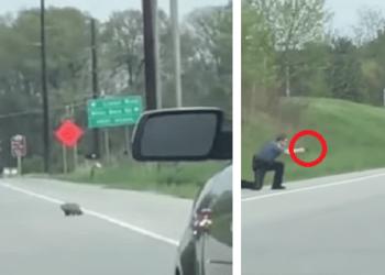Un poliziotto spara ad una marmotta perchè intralcia il traffico [VIDEO]
