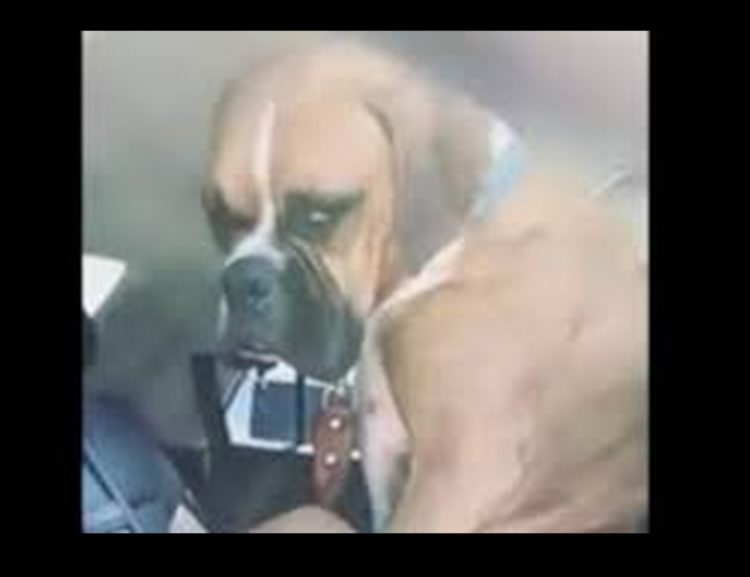 Nacho non vuole scendere dal seggiolino e il suo video diventa virale
