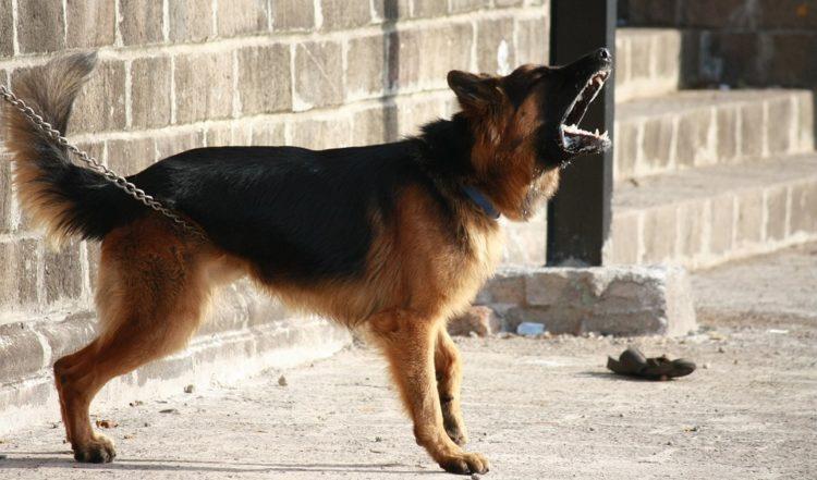 Perchè il cane abbaia?