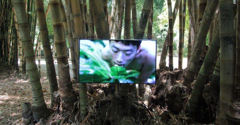 Sesso con le piante nelle foreste di Taiwan: polemiche e proteste