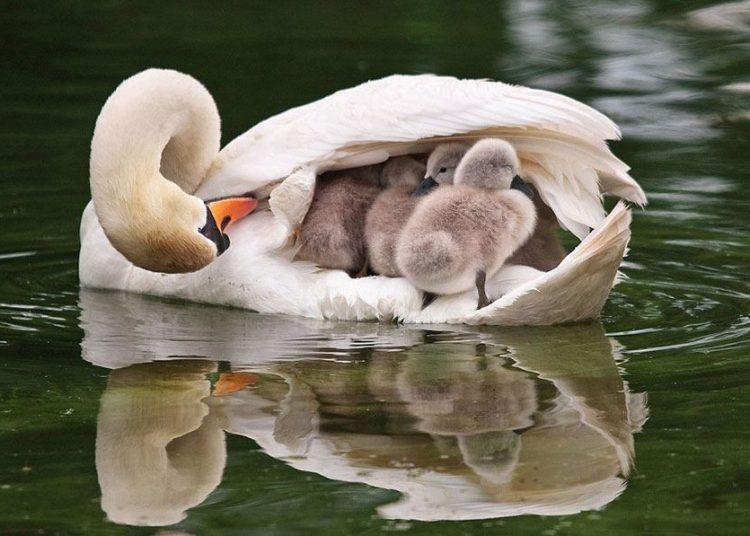 Le foto bellissime e tenere delle famiglie animali