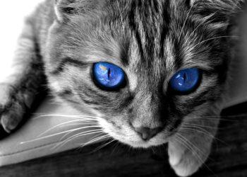 La reazione del gatto quando sparisce il suo amico umano diventa virale