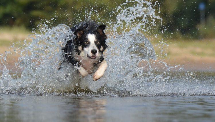 Idroterapia per i cani: ecco i benefici