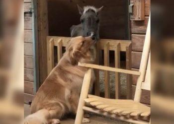 L'emozionante amicizia tra un Golden Retriever e un cavallo salvato da morte certa