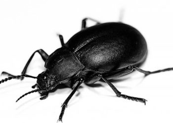 Sono gli scarafaggi i nuovi meccanici che aggiustano gli aeroplani