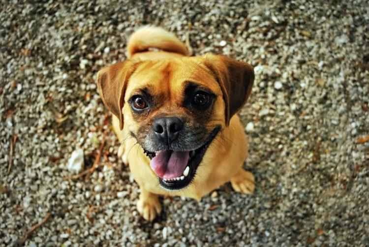 """I modi in cui il tuo cane dice """"ti amo"""""""