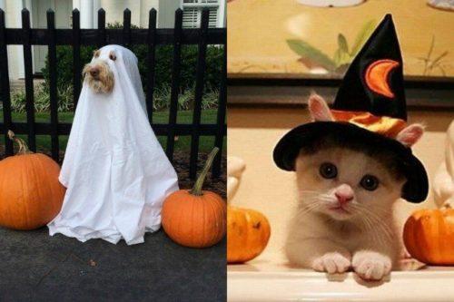 vestiti-per-halloween-viralpop