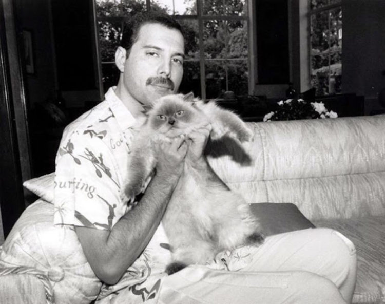 L'amore di Freddie Mercury per i suoi gatti in Bohemian Rhapsody