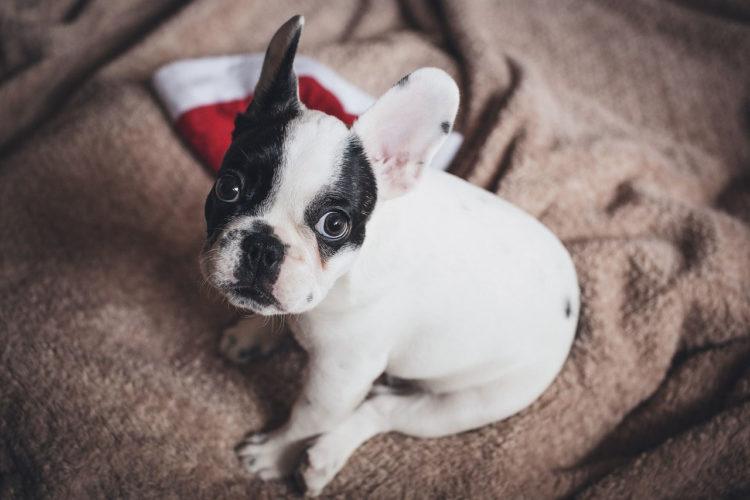 lollipaw: la prima box di Natale per cani e gatti