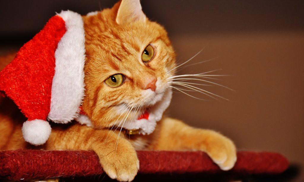 Regali di natale per gatto